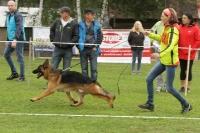 KVV Polička 2017 - Mladí psi