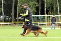 KVV Polička 2017 - Pracovní psi dlouhosrstí